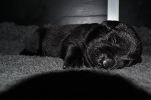 Pups week 2