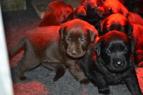 Pups week 4